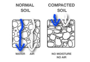 Compaction vs. Normal Soil
